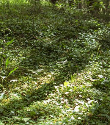 Tiskaretjärnsleden, Gräsmark